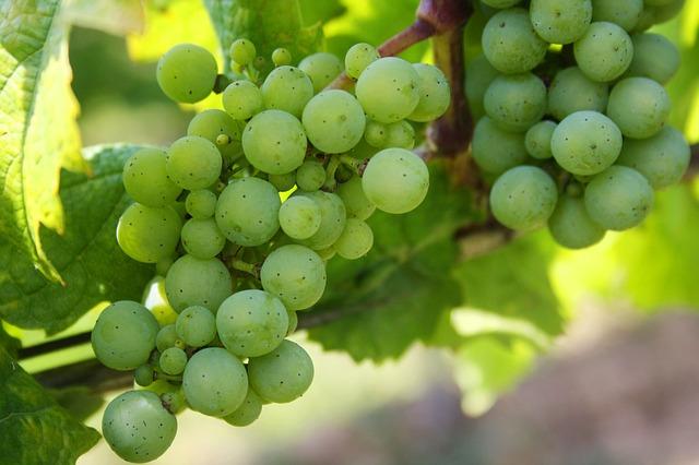 grapes-439300_640