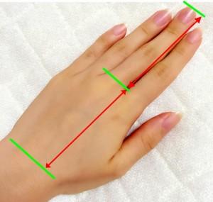 指の長さの目安