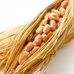 納豆で紫外線対策