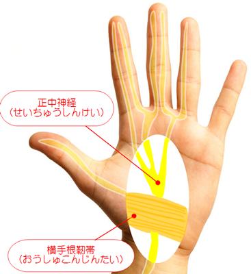 手根管症候群,正中神経