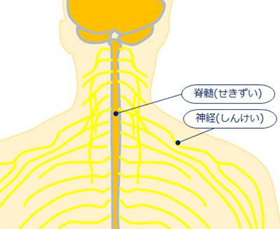頚椎症性脊髄症 神経根症