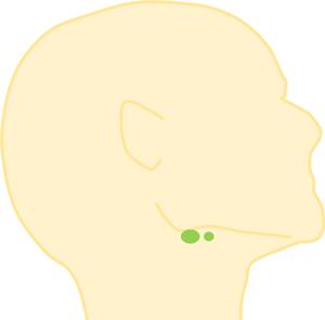 リンパ節の場所,顎の下