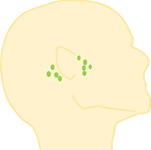 首リンパの場所,耳の前後